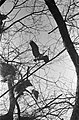 Reigers in het Oosterpark Documentnummer 911-0963 Fotograaf ANEFO Lindeboo, Bestanddeelnr 911-0992.jpg