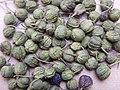 Rhamnus cathartica Gelbbeere01.jpg