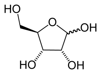 Furanose - The chemical structure of ribose in its furanose form. The wavy bond indicates a mixture of β-ribofuranose and α-ribofuranose.