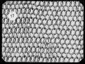 Ringbrynja med halvarmar - Livrustkammaren - 70613.tif