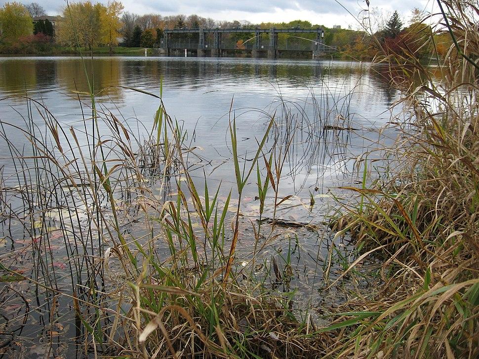 Riparian restoration, Speed River