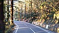Road through forest.jpg