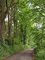 Road to Cotehele Quay - geograph.org.uk - 1899167.jpg