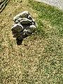Roccia al interno del Parco del Monte Barro.jpg