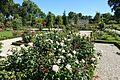 Rose garden @ Parc de Bagatelle @ Paris (28382571665).jpg
