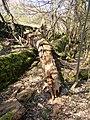 Rotten tree trunk, Southowram - geograph.org.uk - 397871.jpg