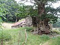 Ruined farm, near Rhewl - geograph.org.uk - 1587551.jpg