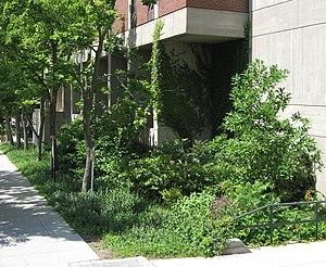 Rain garden - Rain garden, SUNY College of Environmental Science and Forestry, Syracuse, New York