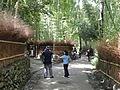 Sagano, Kyoto - DSC06097.JPG