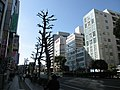 Saiwaicho - panoramio (3).jpg