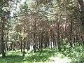 Samtskhe-Javakheti, Georgia - panoramio (8).jpg