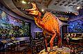 San Diego Natural History Museum (19091652903).jpg