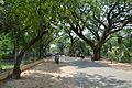 Santiniketan-Bolpur Road - Birbhum 2014-06-28 5187.JPG