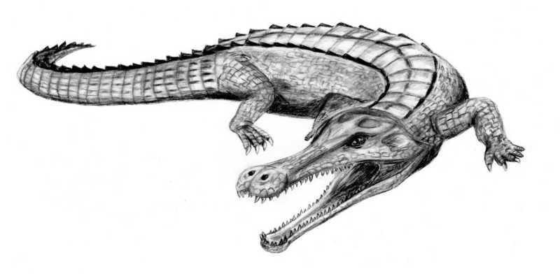 Sarcosuchus BW