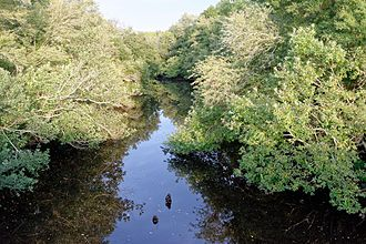 Satilla River - Satilla River, south of Douglas, Georgia