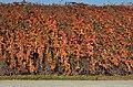 Schönbrunn trellises in autumn.jpg