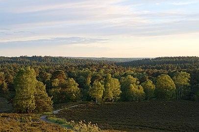 Schöne Aussicht vom Brunsberg über die Wälder und die Heidekrautgewächse mit Wanderweg.jpg