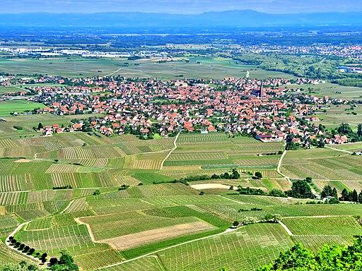 Scherwiller, vu de l'Ortenbourg