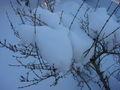 Schnee in Busch 8524.jpg