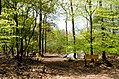 Scoutcentrum Buitenzorg Baarn - panoramio (6).jpg