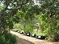 Sendero del recorrido botánico.JPG