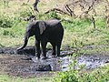 Serengeti National Park-108491.jpg