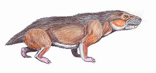 <i>Microgomphodon</i> Genus of therapsid from the Middle Triassic of southern Africa