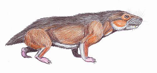 Microgomphodon