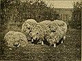 Sheep, breeds and management (1893) (14595273469).jpg