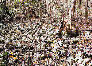Biscayne National Park - Piles of conch and whelk shells left behind by Native Americans