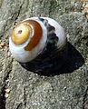 Shell (6925695134).jpg