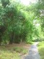 Singapore Botanic Gardens, Bamboos 4, Sep 06.JPG