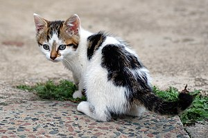 Presentiment and the Story About the Stray Kitten