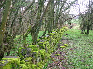English: The drystone dyke boundary above the ...