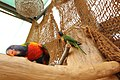 Slovenske Konjice (Mini Zoo Land) - ptiči 10.jpg