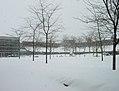 Snowy Valentines Day (390351050).jpg