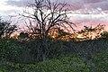 Solnedgång Etosha-5927 - Flickr - Ragnhild & Neil Crawford.jpg