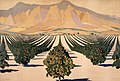 South African orange orchards Verger d'orangers en Afrique du Sud (49024879713).jpg