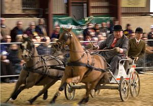 Carriage driving - Ardingly, Sussex, 2007