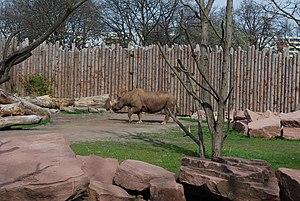 Magdeburg Zoo - Image: Spitzmaulnashorn Zoo Magdeburg