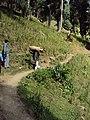 Srinagar - Pahalgam views 59.JPG