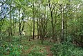 St Leonards Forest - geograph.org.uk - 1288379.jpg