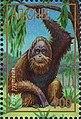 Stamp of Abkhazia - 1997 - Colnect 999817 - Pongo pygmaens.jpeg