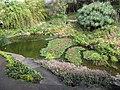 Starr-110307-1981-Eichhornia crassipes-habitat and koi pond-Kula Botanical Garden-Maui (25077355445).jpg