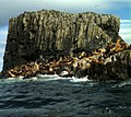 Steller seals, Alaska Maritime NWR (5124078062).jpg