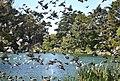 Stow Lake, Golden Gate Park (6320980955).jpg