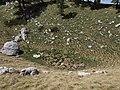 Suffosion sinkhole Dinarids Mt Orjen leg P.Cikovac.jpg