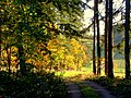 Sunny autumn - Flickr - Stiller Beobachter.jpg