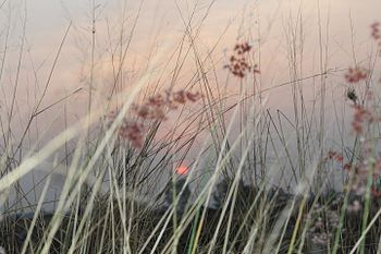 Sunrise grass.jpg