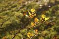 Sunshine after rain - 1 (8196584147).jpg